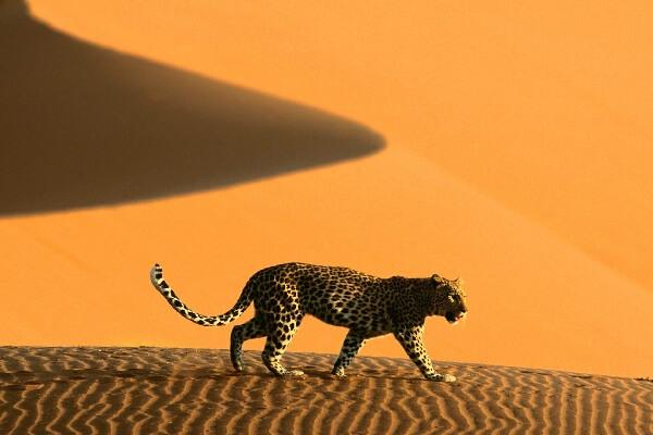Namibia_gl1