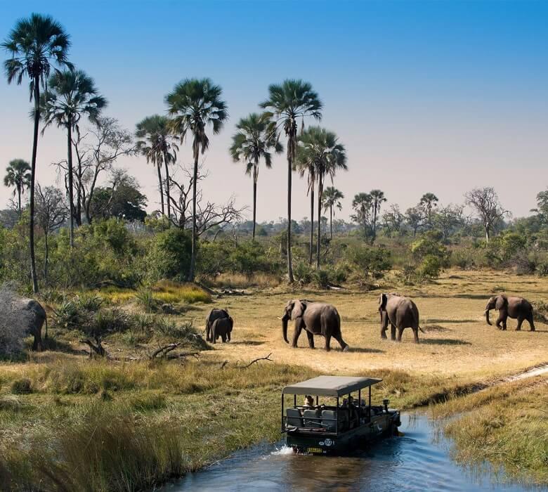 okavango_delta_safari2