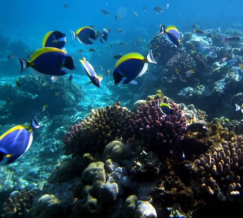 diving_mombasa