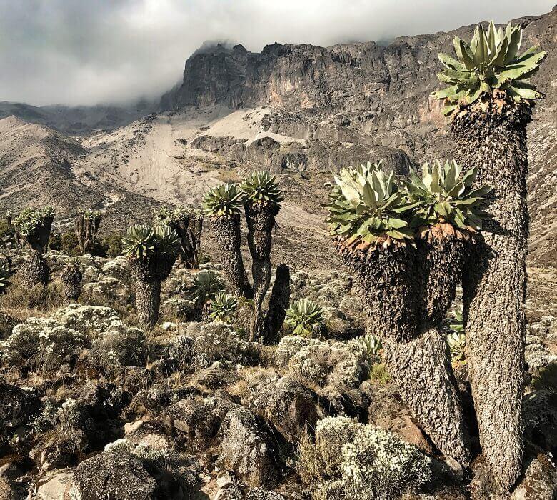 kilimandjaro_rongai_2