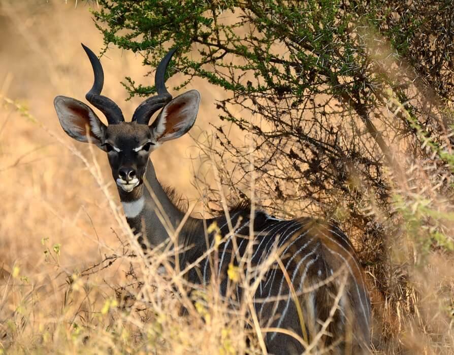 safari_granta_2