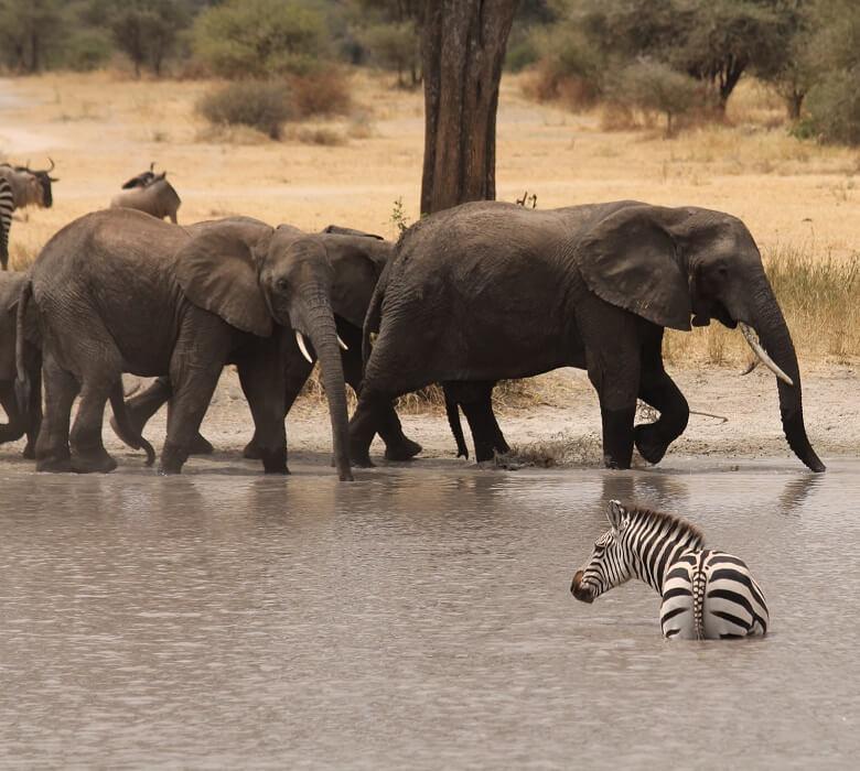 safari_kongoni_2