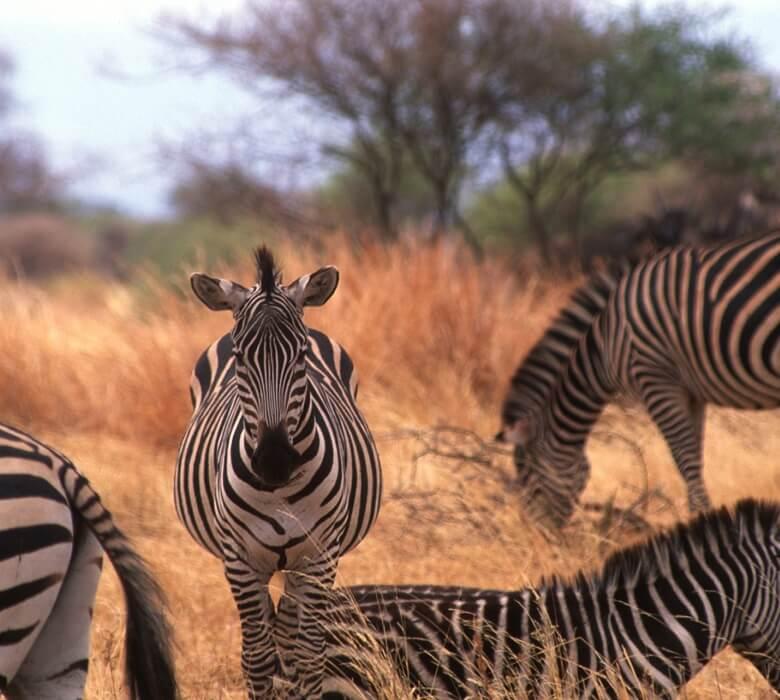 safari_sunny_2