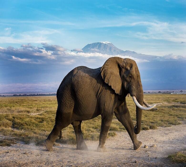 Kenya_Amboseli_CorletteWesselsWildlifeElephant2