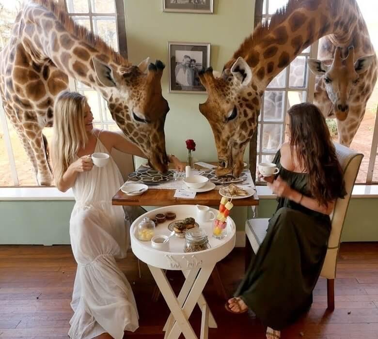 Giraff Manor