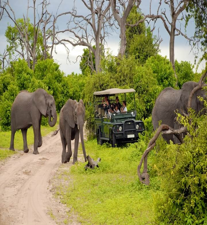 chobe-safari (1) (1)