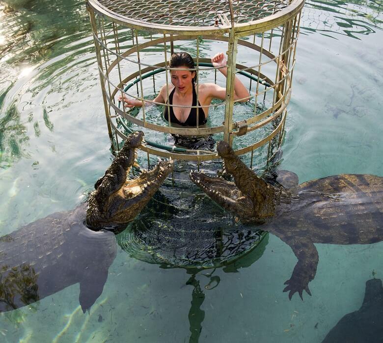 croco_diving