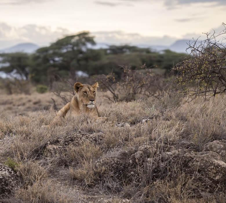 safari_oribi_2