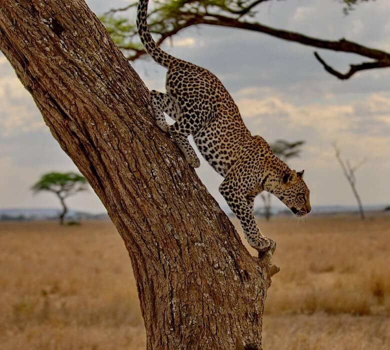 safari_oriks_2