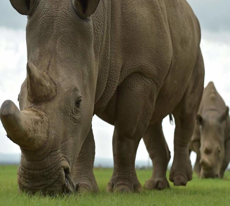 kenya-rhino