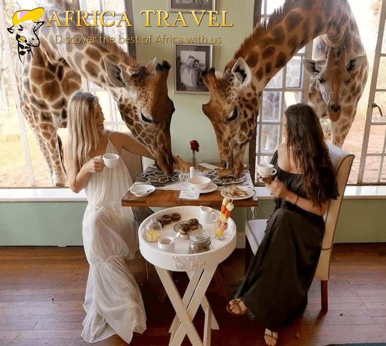 maxresdefault giraff(1).jpg
