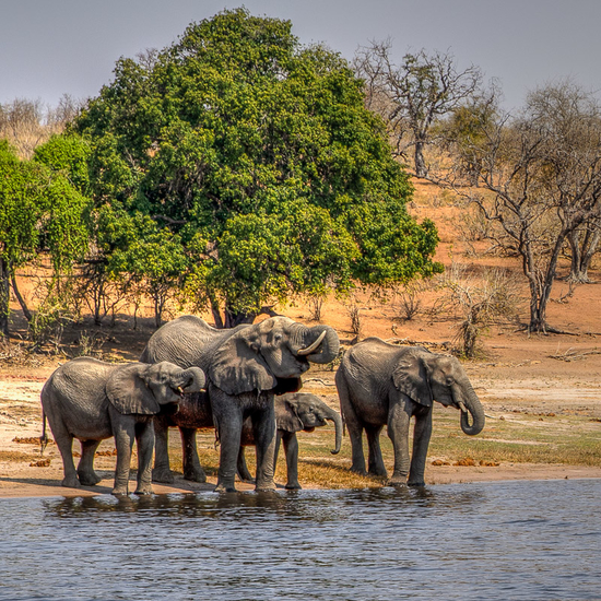 chobe-national-park-elephants (1)