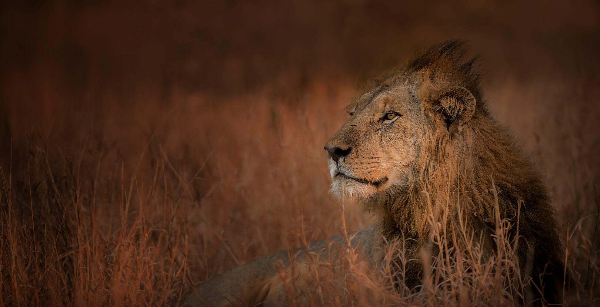 cropsingita-lebombo-wildlife6 (1)