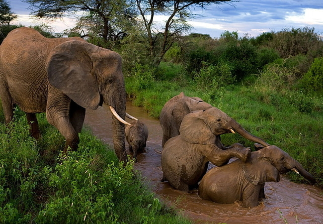 elephants-young-mother-caring-