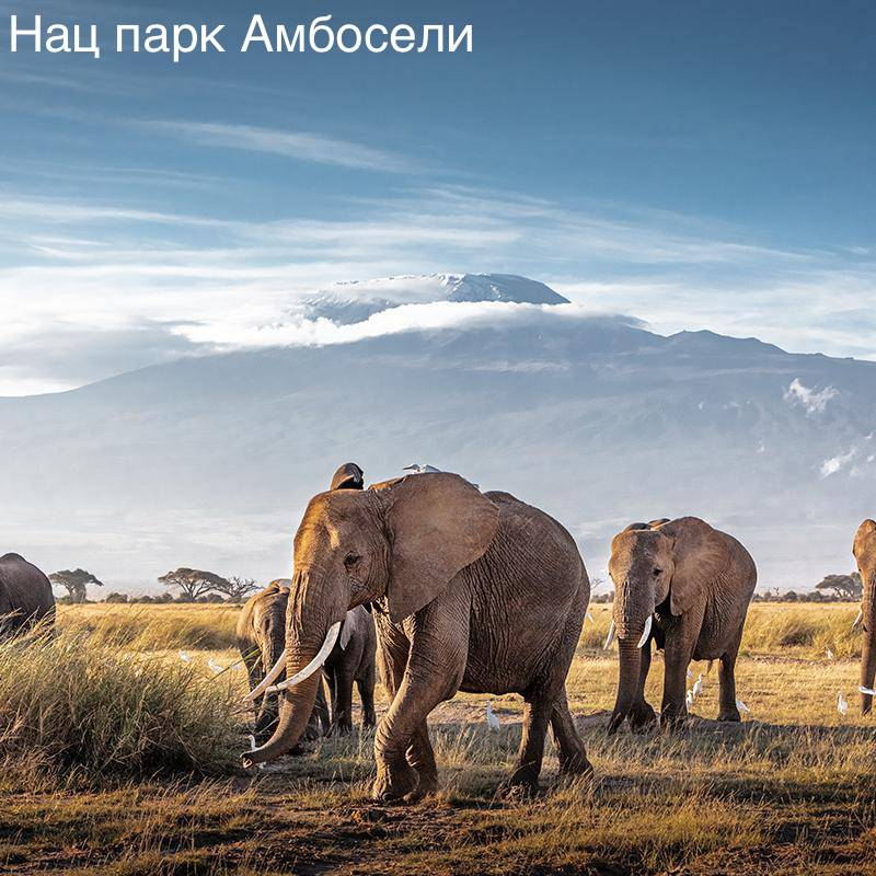 Amboseli-when-to-go.jpg.1920x500_q70_crop-scale