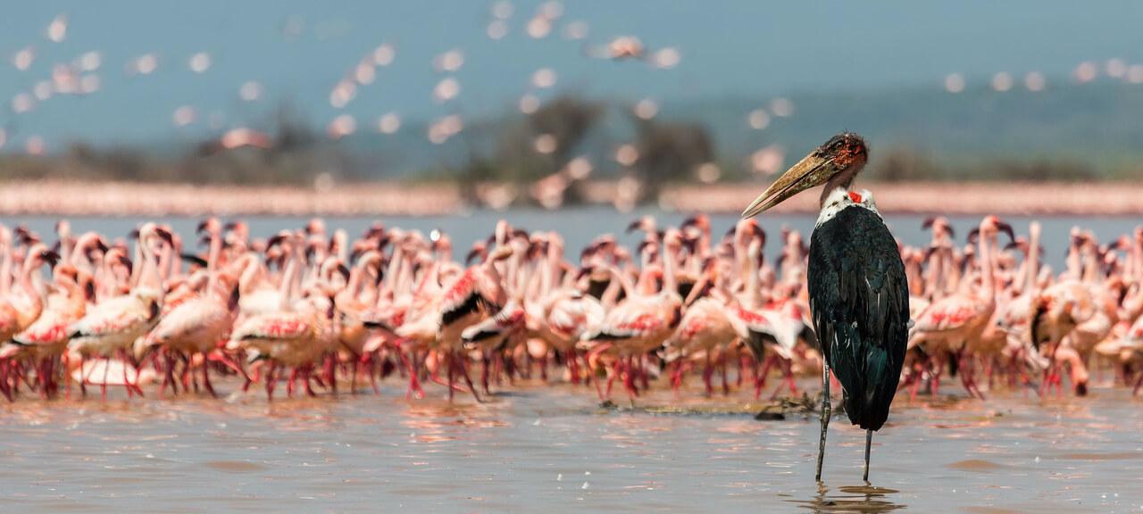 Lake-Naivasha (1)