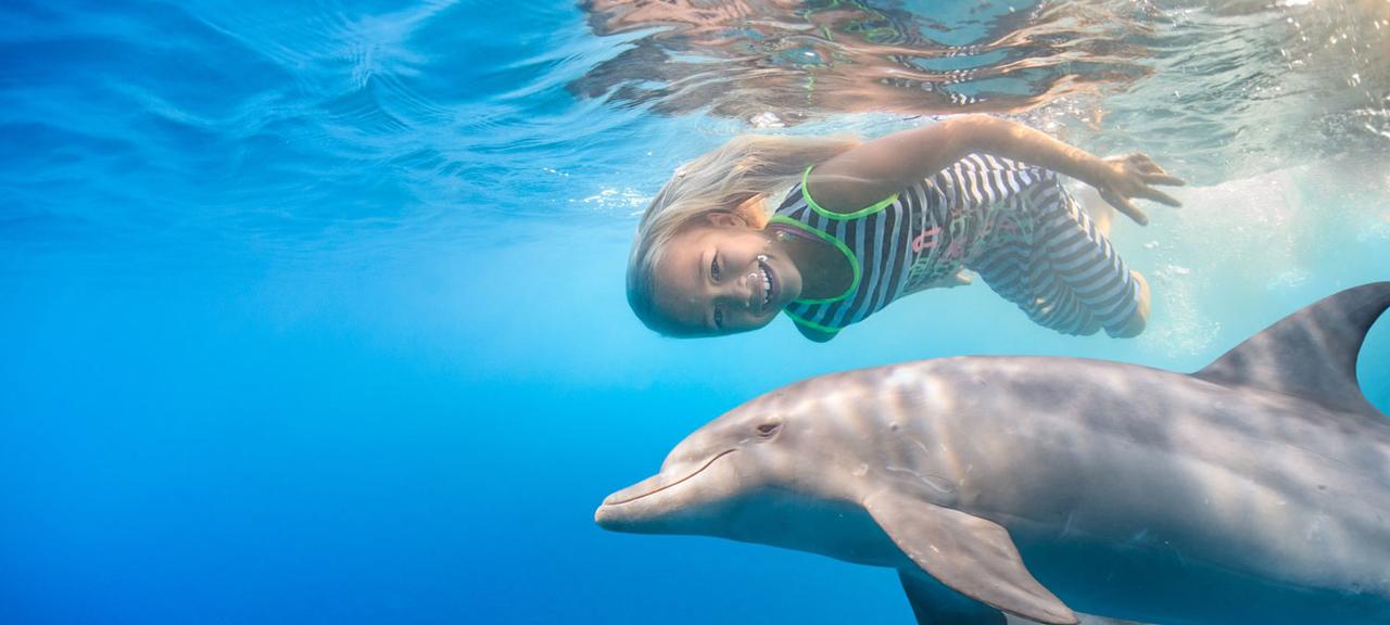 kisite-dolphin-snorkeli