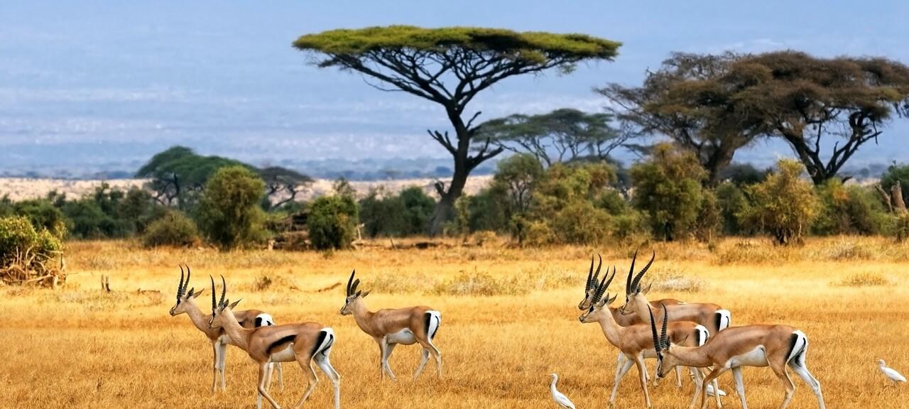 savanna (1)