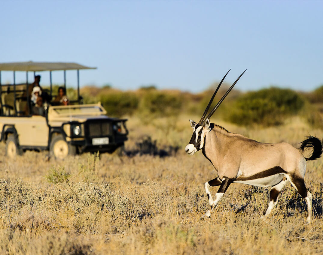 central-kalahari-game-reserve (1)