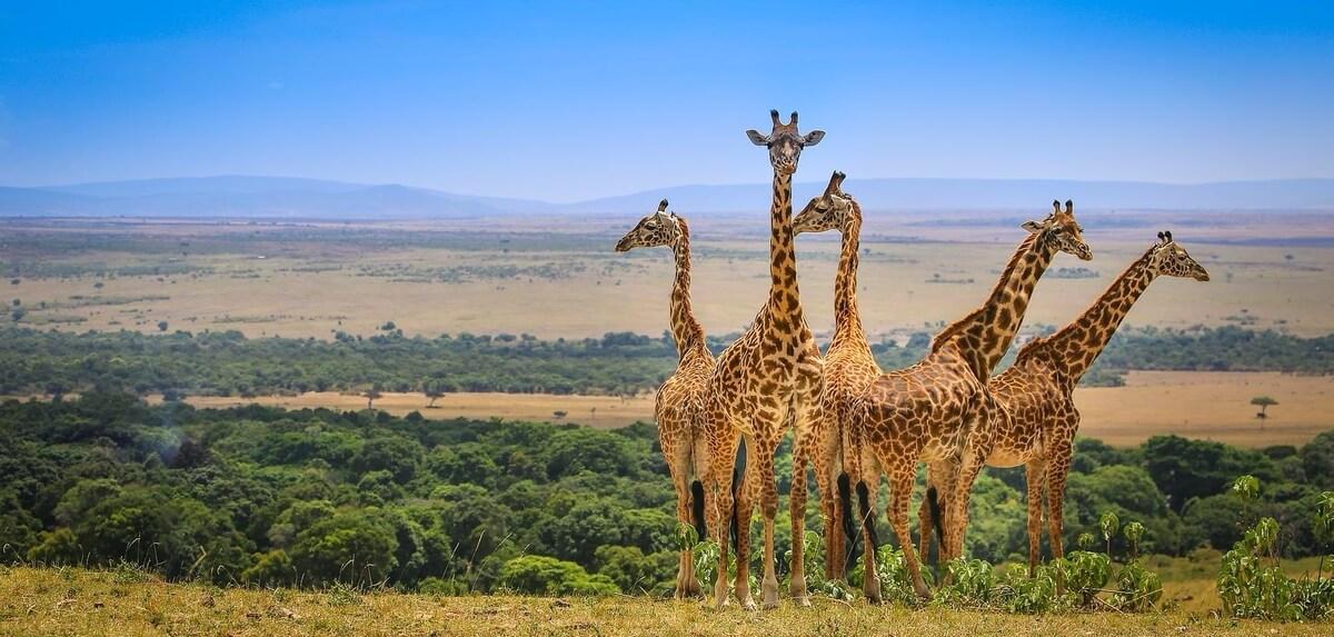 Safari-Kenya-Masai-Mara