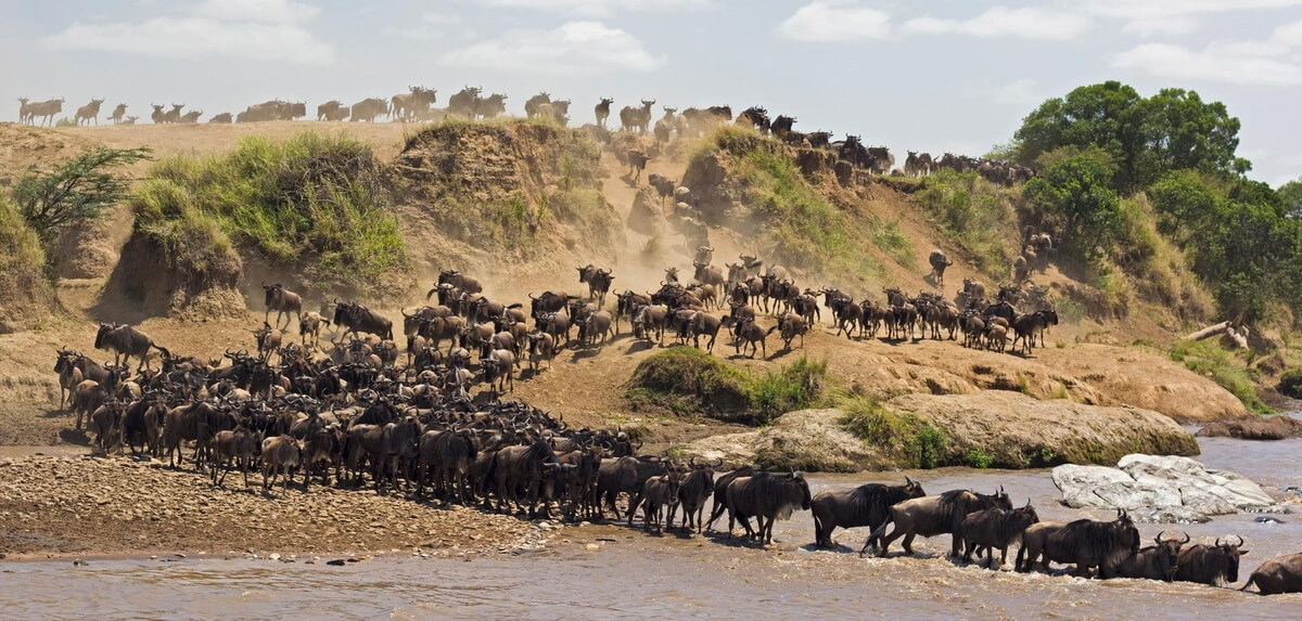 great-migration-river-crossing
