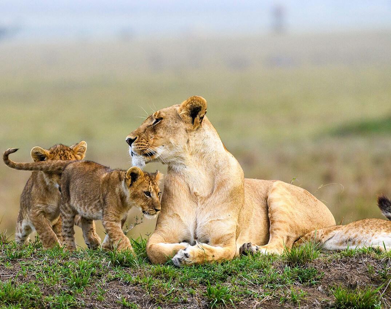 masai-mara-game