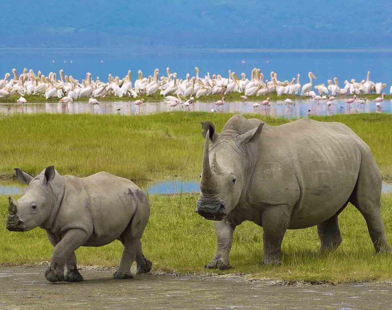 rhino-ngorongo