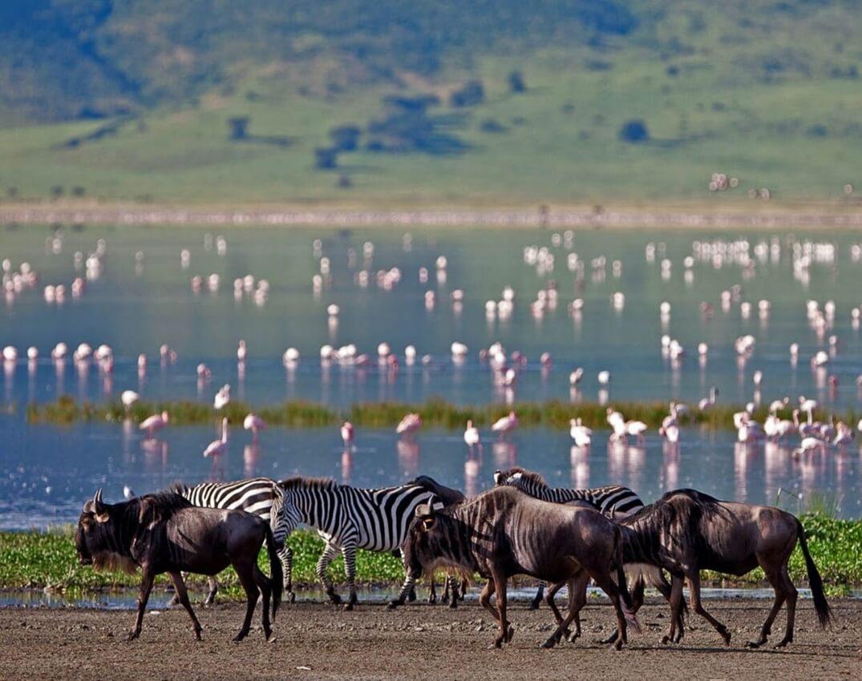 safari-_-lake
