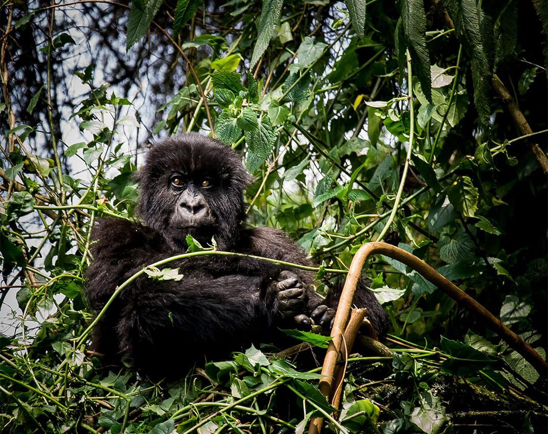 ruanda_d1_3