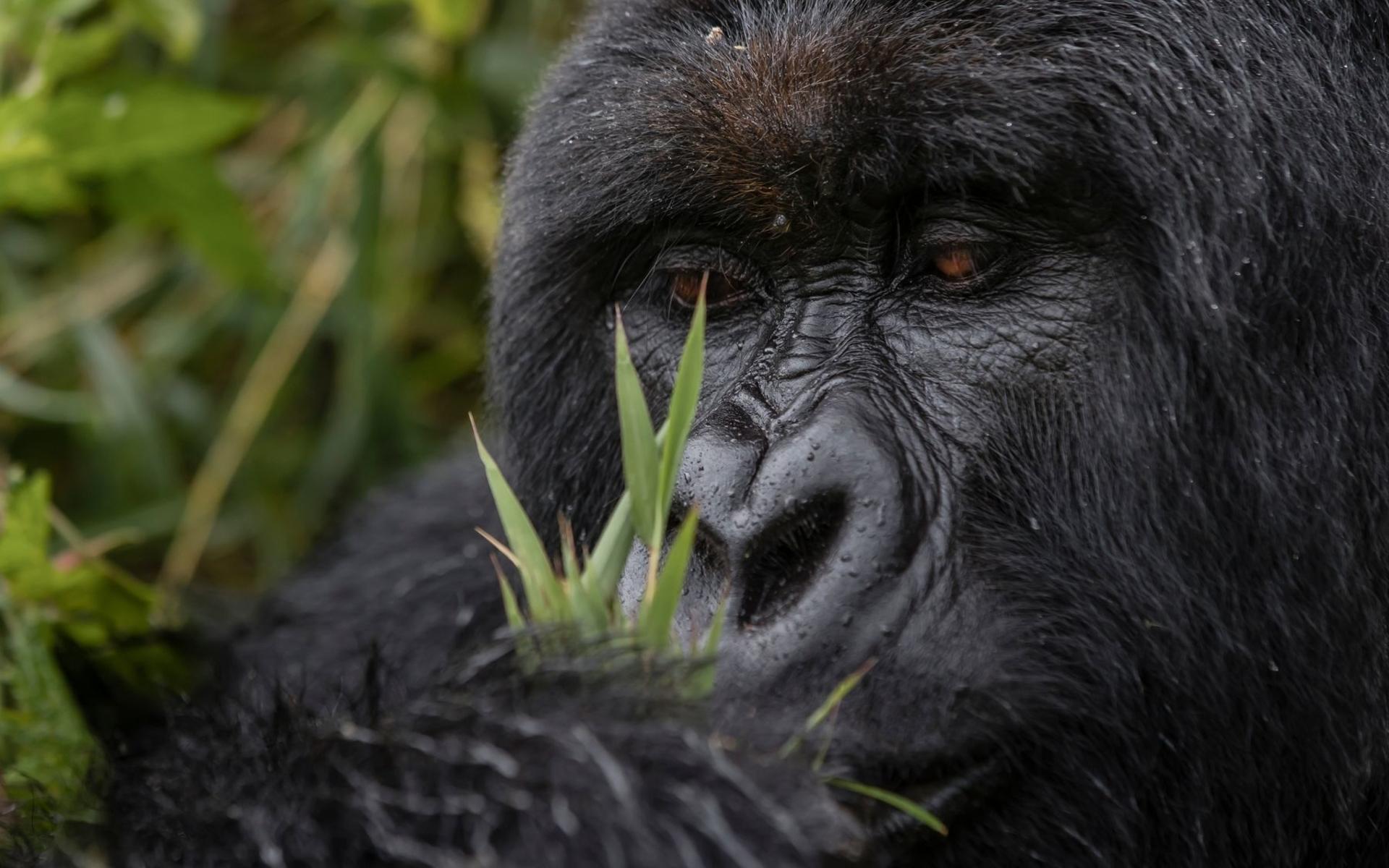 singita-kwitonda-lodge---goril